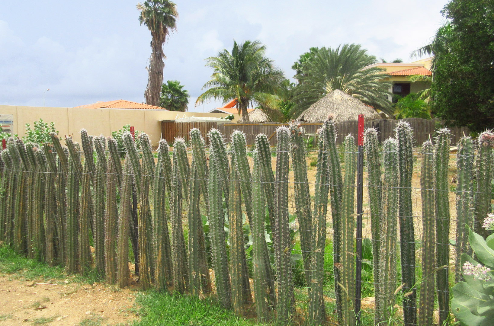 The Cactus Fence